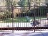 fences_1278